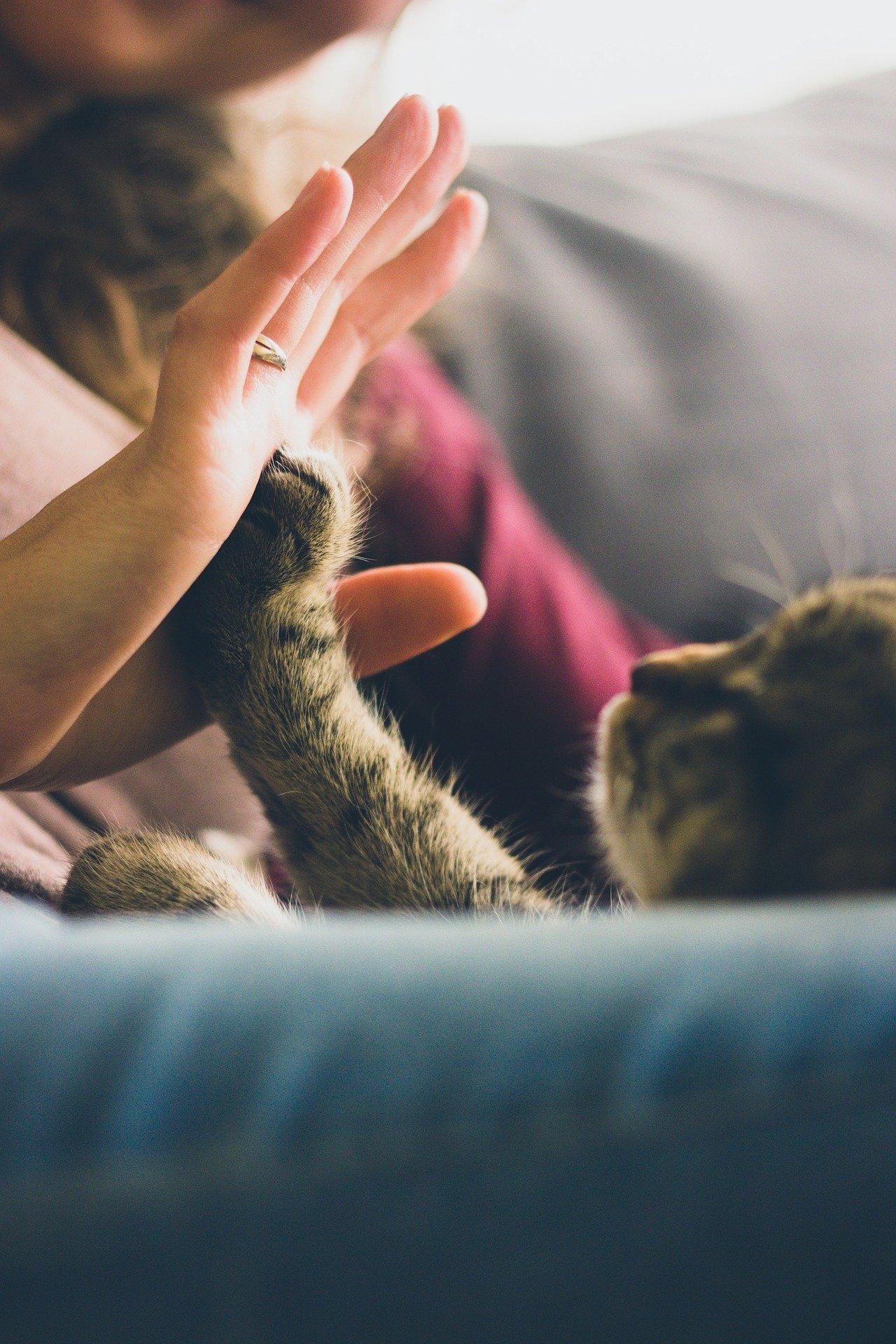 kvinde og kat